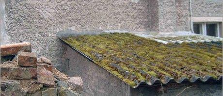 Sanierung Kastanienhaus